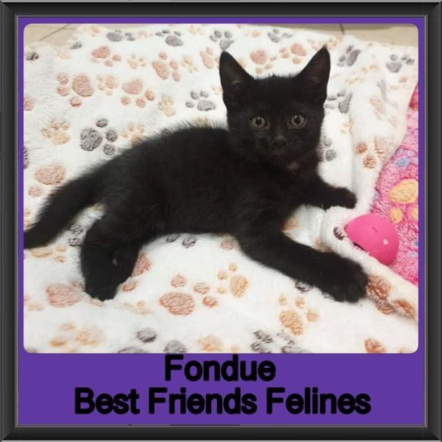 Photo of Fondue
