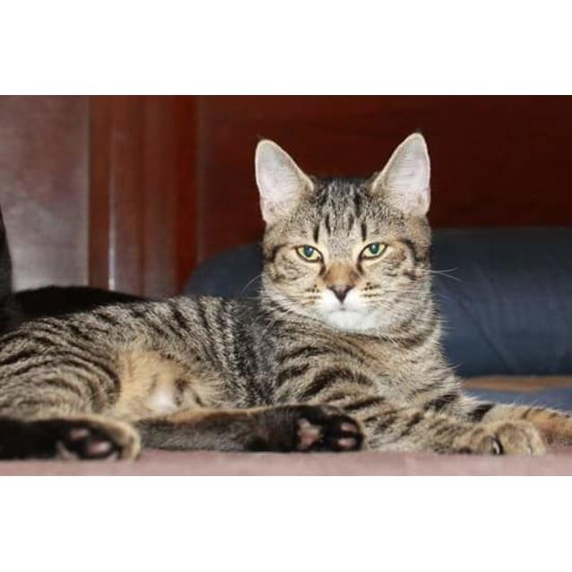 Photo of Tabatha