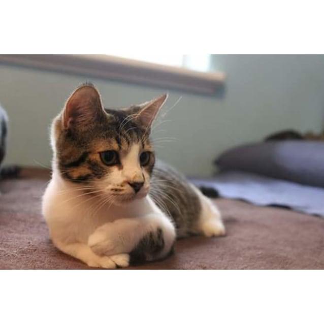Photo of Talulah