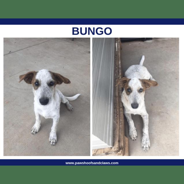 Photo of Bungo