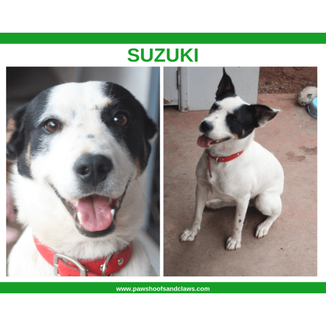Photo of Suzuki