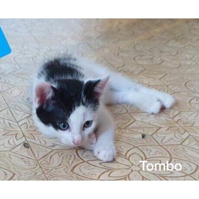 Photo of Tombo