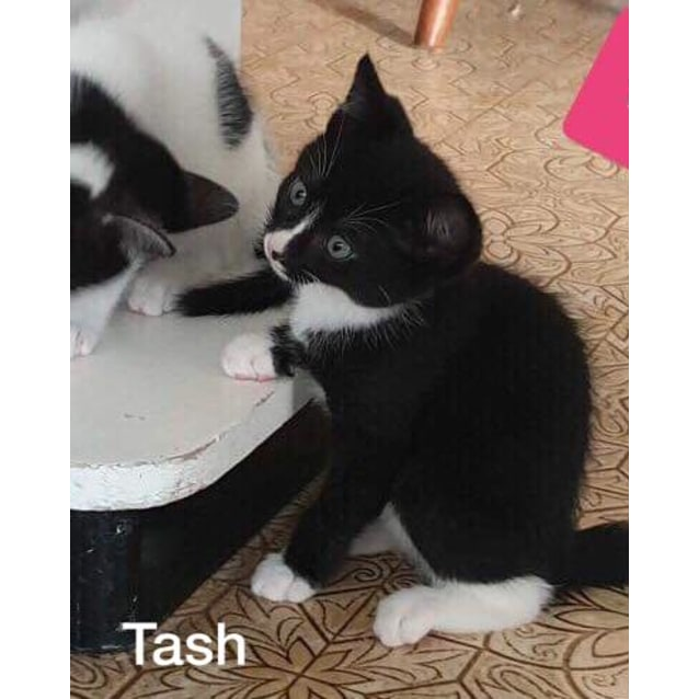 Photo of Tash