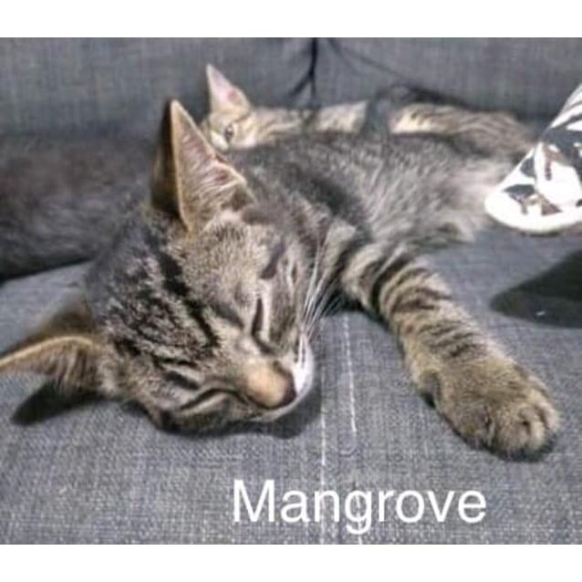 Photo of Mangrove