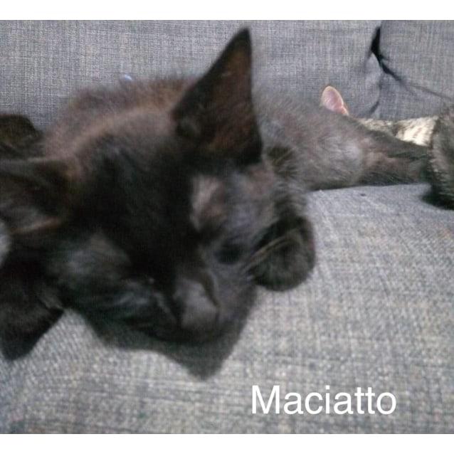 Photo of Maciatto