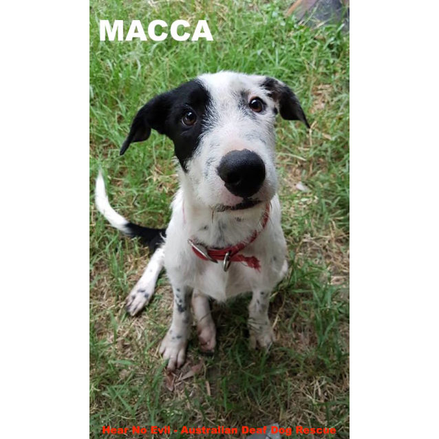 Photo of Macca
