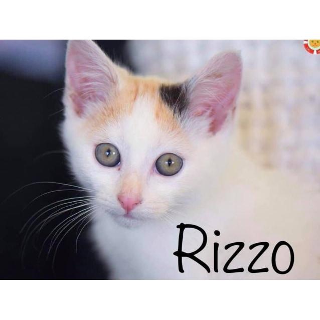 Photo of Rizzo