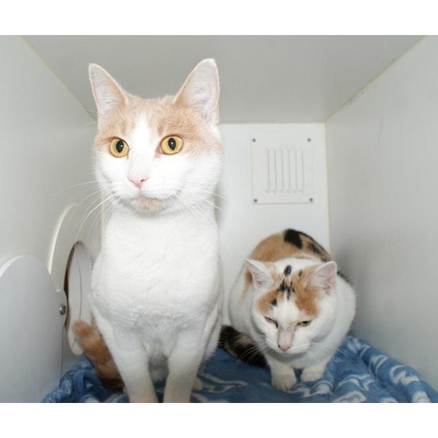 Photo of Cupid And Cheetah Sua003795 & Sua003794