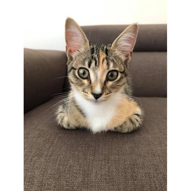 Photo of Kaia