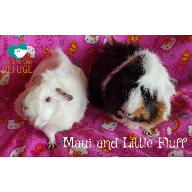 Photo of Maui And Little Fluff (Unsuitable For Young Kids)