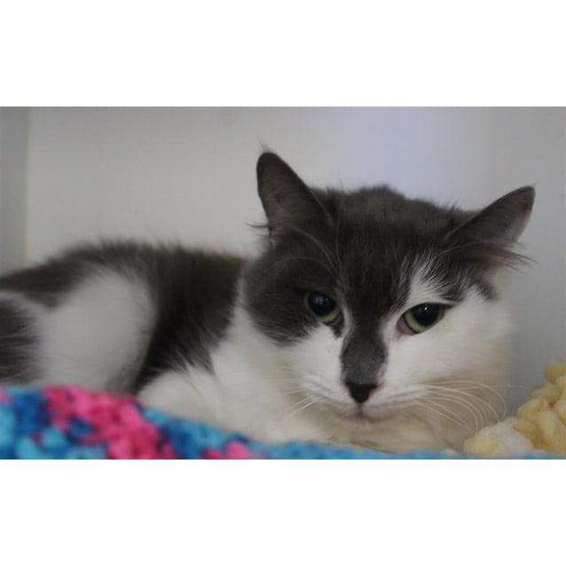 Photo of Cosmo