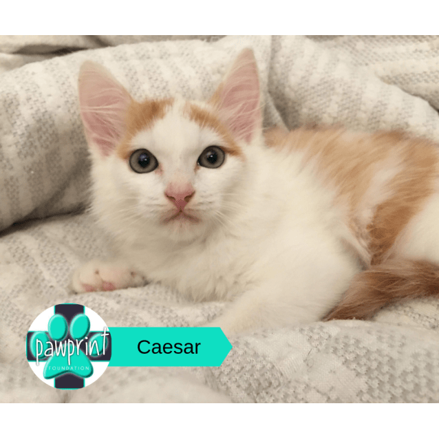 Photo of Caesar