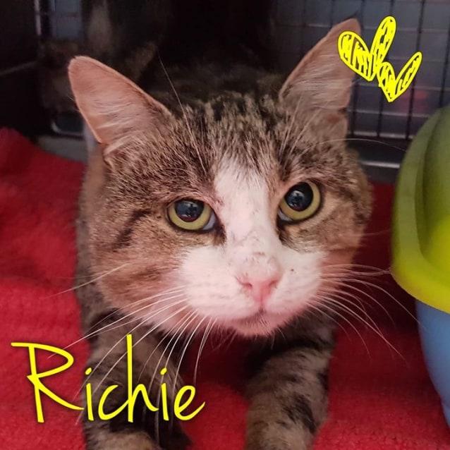 Photo of Richie   Meet Me At Neko Hq/Cat Lounge Preston