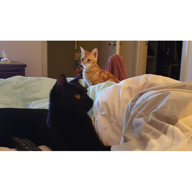 Photo of Kayleigh & Jaxson (Located In Bentleigh)