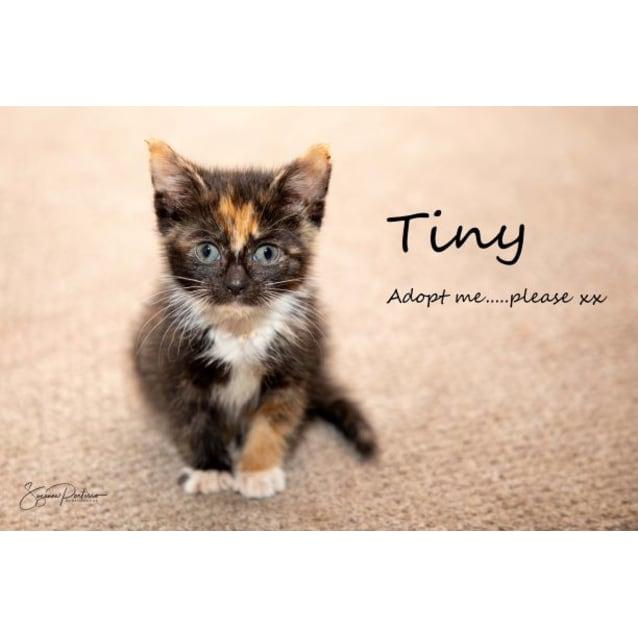 Photo of Tiny