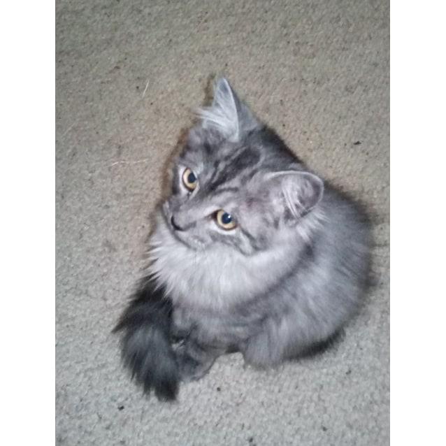 Photo of Momo (Located In Doveton)