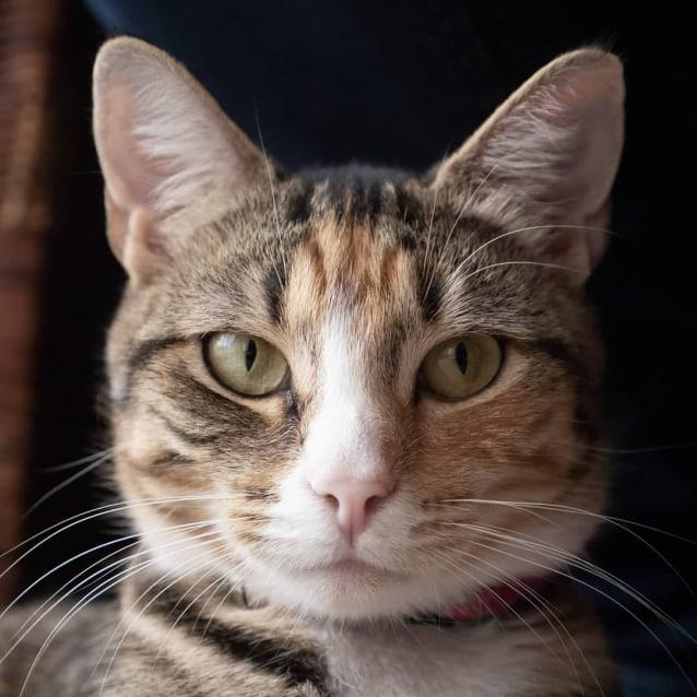 Photo of Megan (Located In Boronia)