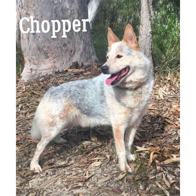 Photo of Chopper