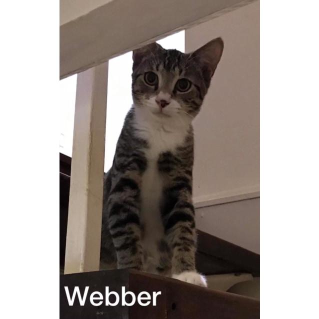 Photo of Webber