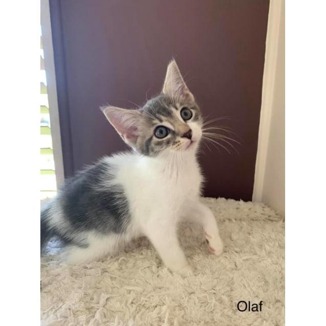 Photo of Olaf