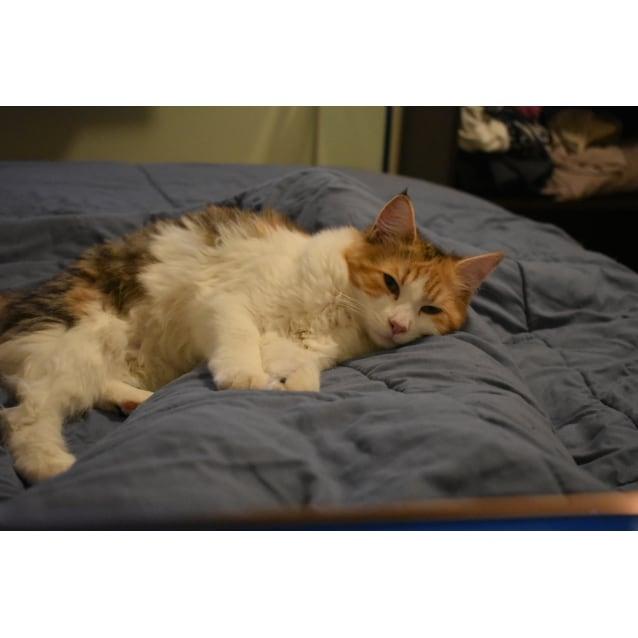 Photo of 9 Mth Old Cuddlebug Amber