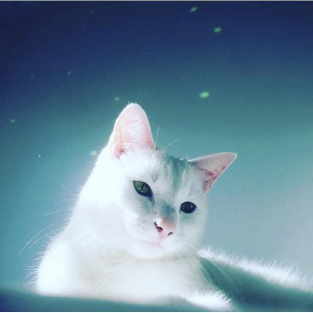 Photo of Milky