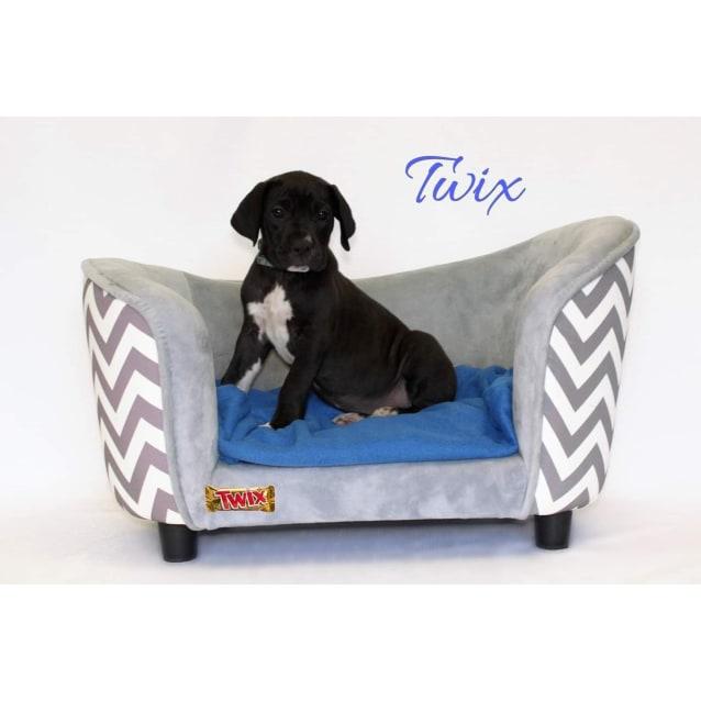 Photo of Twix