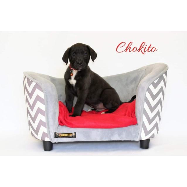 Photo of Chokito