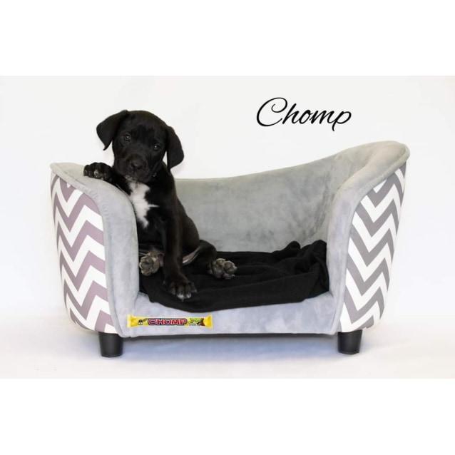 Photo of Chomp