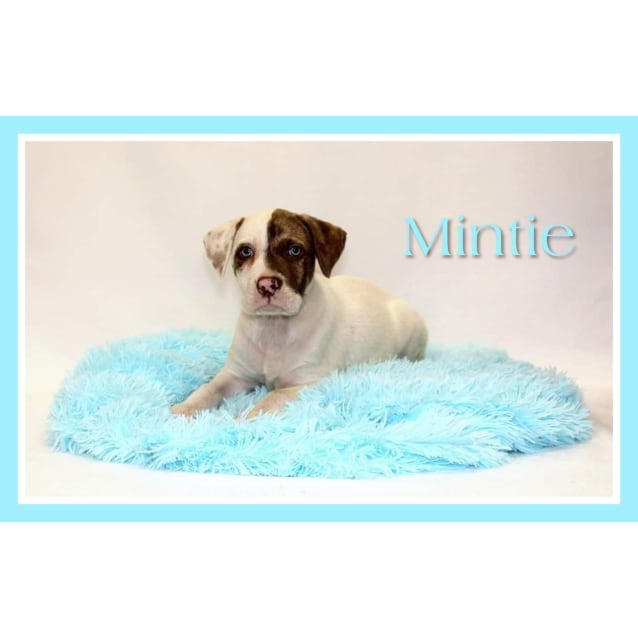 Photo of Mintie