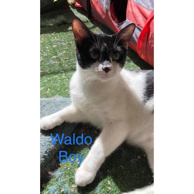 Photo of Waldo