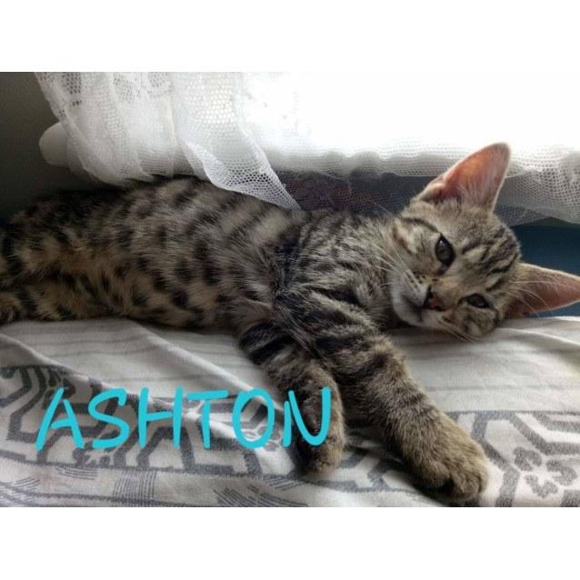 Photo of Ashton