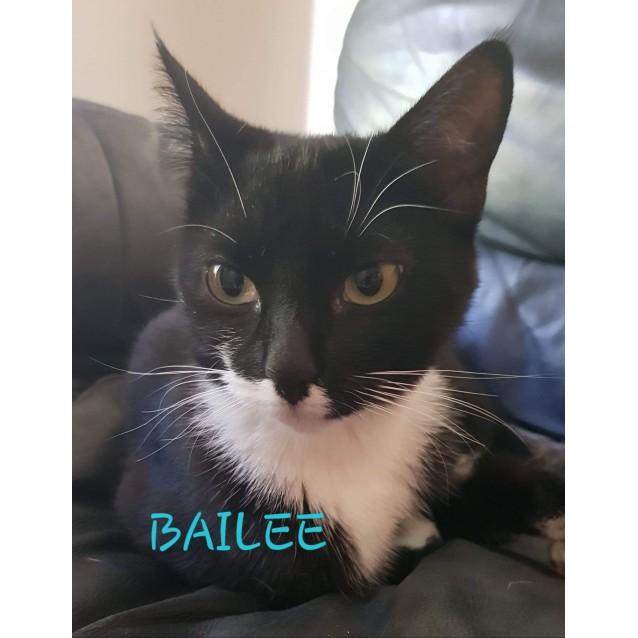 Photo of Bailee
