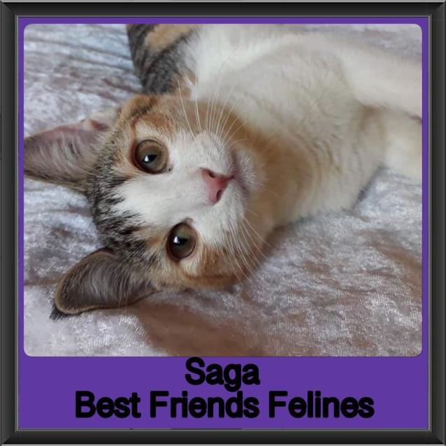 Photo of Saga