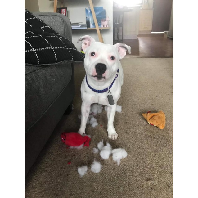 Photo of Tigggy