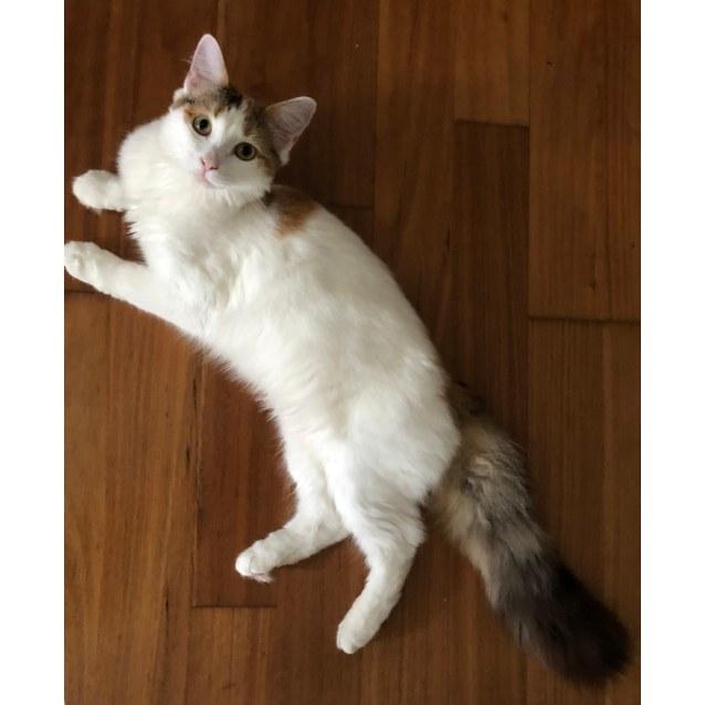 Photo of Saki