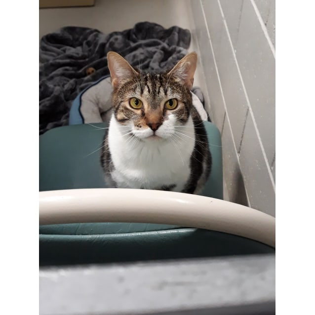 Photo of Milton