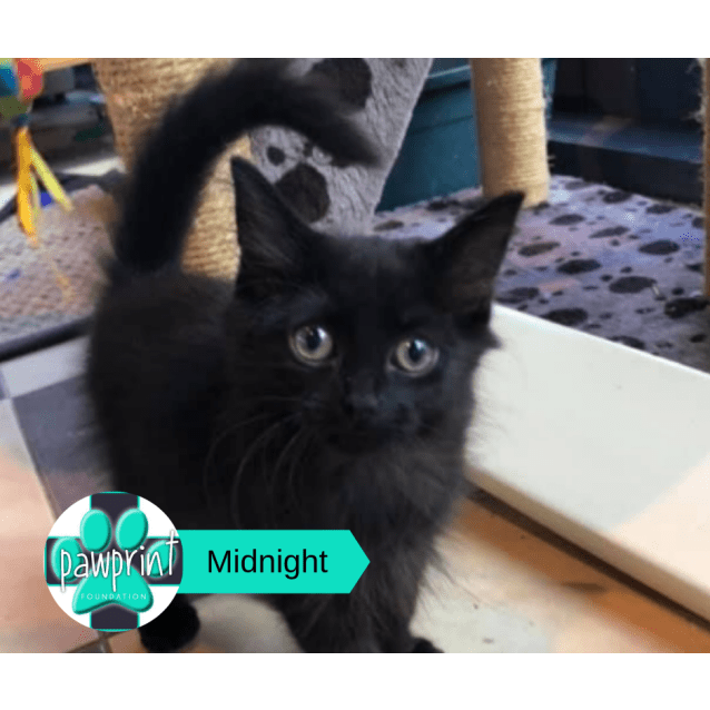 Photo of Midnight