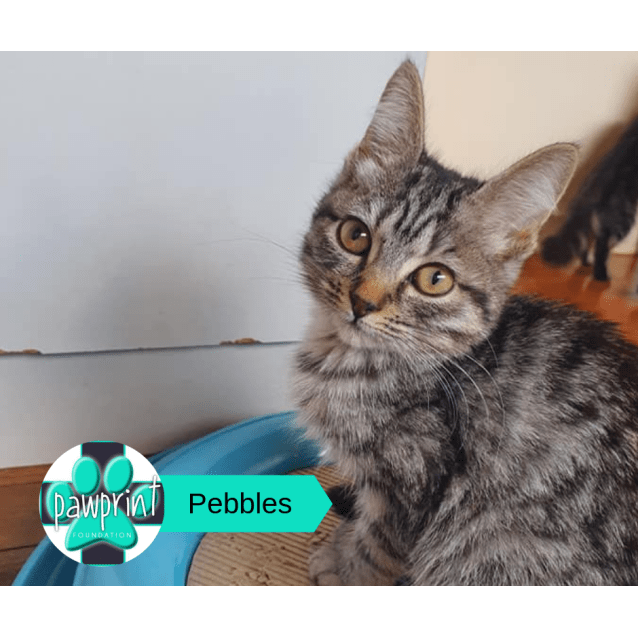 Photo of Pebbles
