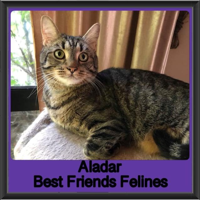 Photo of Aladar