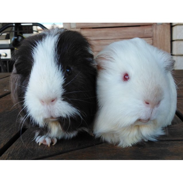 Photo of Rocky (Brown) And Milko