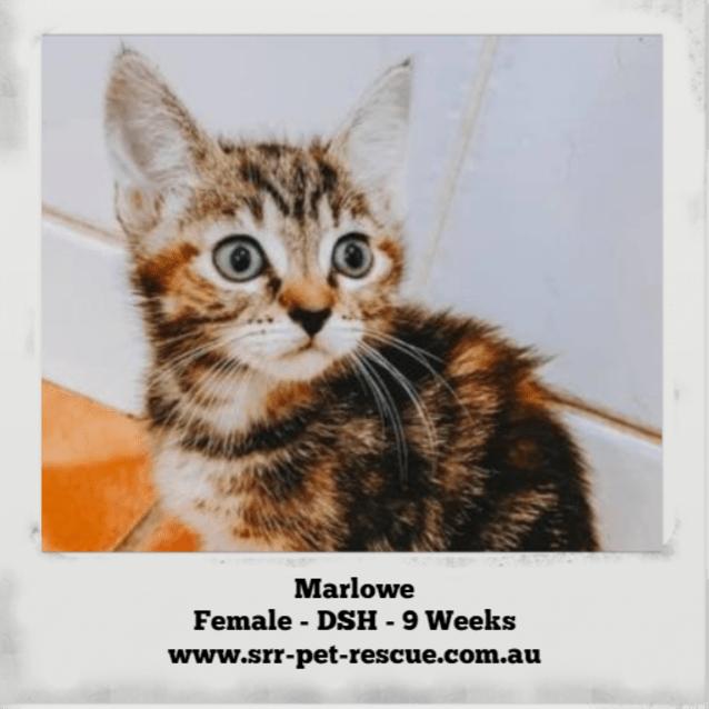 Photo of Marlowe