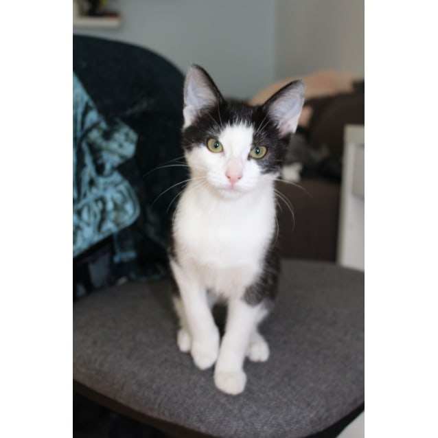 Photo of Belle (Located In Ormond)