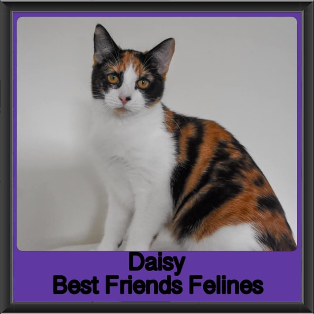 Photo of Daisy
