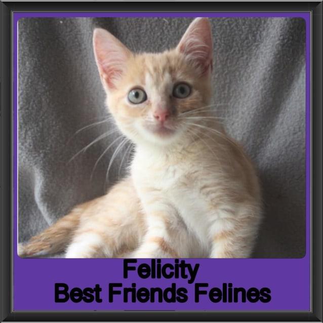 Photo of Felicity