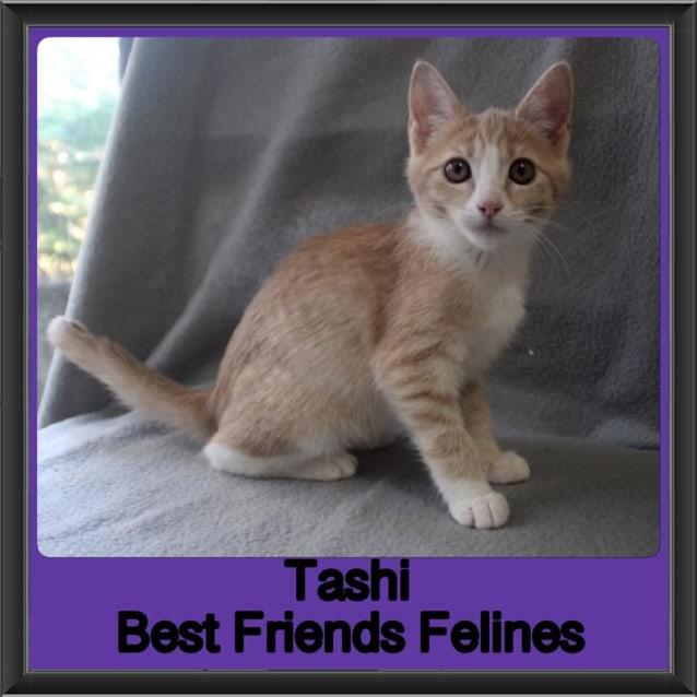 Photo of Tashi