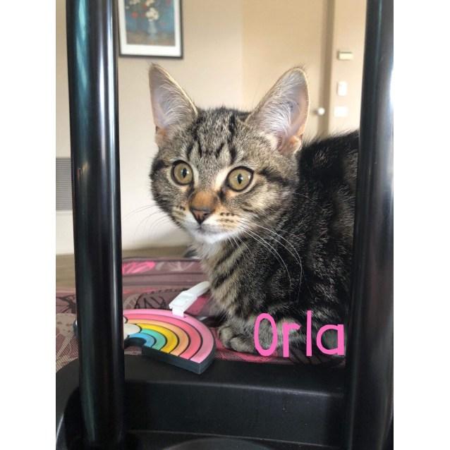 Photo of Orla