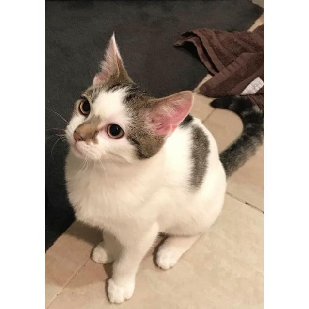 Photo of Presley