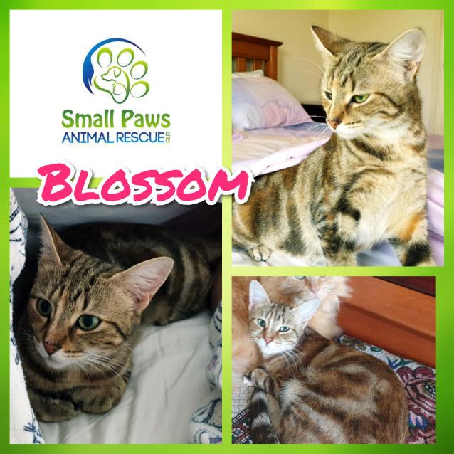 Photo of Blossom