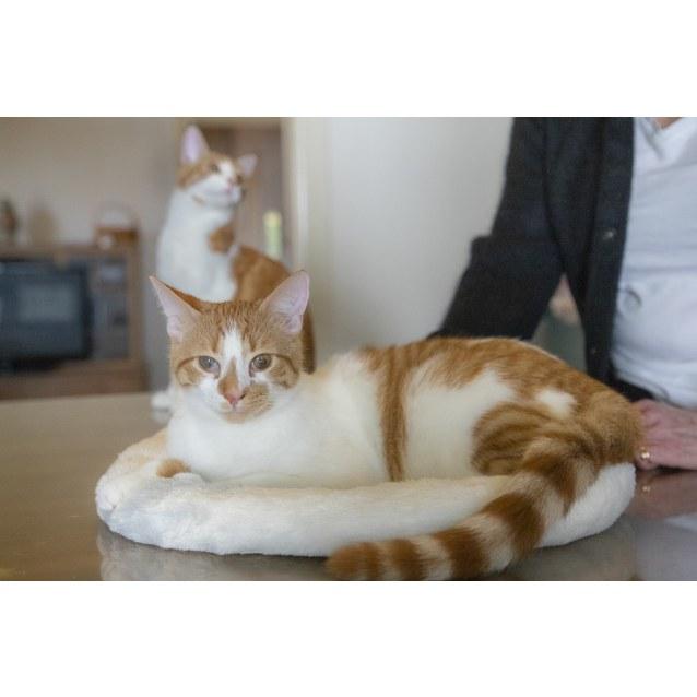 Photo of Apollo And Figaro (Aka Figgy)